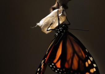 changement papillon